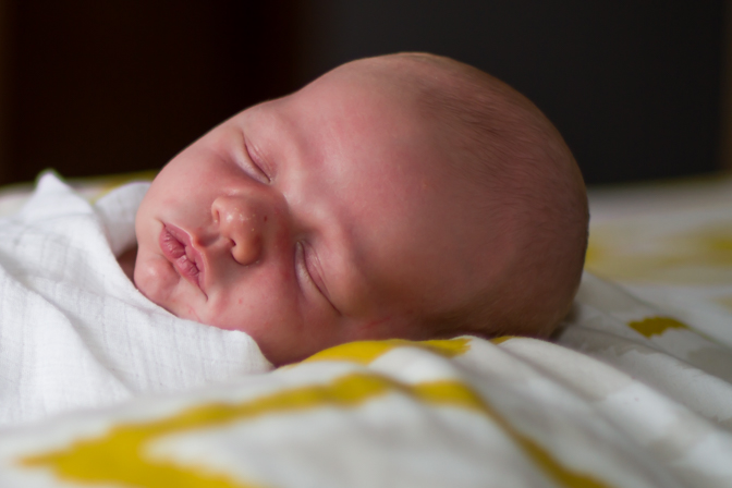 portrait van oevern newborn for wordpress rap-4777